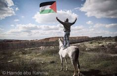 2 Things I love, horses and Palestine!