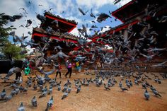 love how some of the pigeons are blurry and others are in focus! Scatter by Dylan & Marianne Toh. (Kathmandu, Nepal)