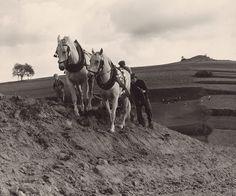 orba | Web umenia Karol Benický Robotníci. Orba1978 - 1982 Folk Art, Museum, Horses, Retro, Life, Animals, Animais, Animales, Animaux