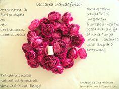 LE COSE ANIMATE: Uscarea trandafirilor - Do it Yourself
