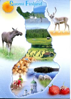 Potatoes, moose, reindeer, forests and lakes, that is Finland. Lofoten, Helsinki, Finland Culture, Finland Map, Native Country, Thinking Day, Best Cities, Travel Posters, Science Nature