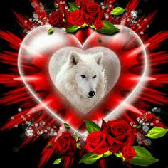 Wolf Images, Wolf Photos, Wolf Pictures, Raven And Wolf, Wolf Love, Lone Wolf, Dream Catcher Art, Wolf Artwork, Fantasy Wolf