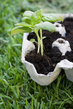 how to plant seeds - cost effective ways