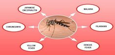 #Mosquito Borne Diseases Symptoms, Prevention and Treatment #zika #dengue…