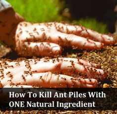 Easy Solution to Kill Ant Piles - Club Soda! – My Merry Messy Life Organic Gardening, Gardening Tips, Gardening Gloves, Container Gardening, Organic Farming, Kill Fire Ants, Get Rid Of Ants, Rid Ants, Natural Pesticides