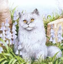 Image result for debbie cook artist Baby Cats, Cats And Kittens, Image Cat, White Cats, Cat Drawing, Pretty Cats, Animation, Animal Paintings, Cat Art
