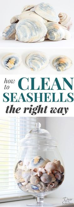 Do you know how to clean seashells the RIGHT way? Yes, there is a right way to clean seashells! This little trick is perfect for getting rid of the gunk and getting those seashells ready for crafting and displaying around the home! Love this beautiful coastal decor! #seashells #cleaning #coastaldecor #cleaninghacks