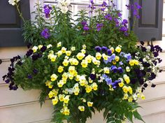Viola, rosemary, holly fern and snapdragons are making a beautiful window statment, love Violas!!