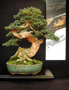Feel-Spirit-l'Esprit de Phil.[Bonsaï]: European bonsaï San Show 2013, Saulieu France                                                                                                                                                                                 Plus