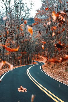 Autumn Tag wallpapers Page Landscape Nature Leaf Leaves Trees Tier Wallpaper, Animal Wallpaper, Colorful Wallpaper, Mobile Wallpaper, Black Wallpaper, Flower Wallpaper, Wallpaper Backgrounds, Wallpaper Quotes, Fall Wallpaper Tumblr