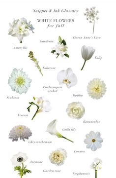 Bridal bouquet fall - White Flowers for Fall Weddings Snippet & Ink Glossary Snippet & Ink Bridal Bouquet Fall, White Wedding Flowers, Fall Flowers, Wedding Bouquets, Types Of White Flowers, Different Kinds Of Flowers, Purple Bouquets, Bouquet Flowers, Purple Wedding