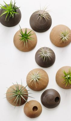 Customized Set of Wall Planters. Wall Planters Unglazed for Air Plants in Chocolate and Hazelnut Clay Bodies.