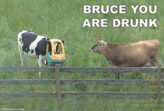funny lol-animals