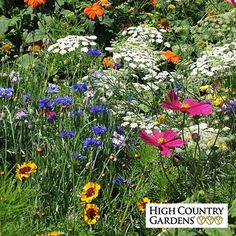 A customer favorite for over 30 years this special blend of wildflowers will do very well in a dry, well drained soil.  Popular in costal areas or sandy soil conditions, this mix contains 25 hardy wildflower varieties.  Color from your annual wildflowers will begin in just 6 weeks and last all season long with 14 annual species for first year color and 11 perennial varieties for lasting color for years to come.