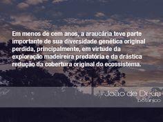 """""""Em menos de cem anos, a araucária teve parte importante de sua diversidade genética original perdida, principalmente, em virtude da exploração madeireira predatória e da drástica redução da cobertura original do ecossistema."""" - João de Deus, botânico"""