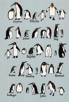 Types of penguins Types Of Penguins, All About Penguins, Cute Penguins, Baby Animals, Funny Animals, Cute Animals, Penguin Day, Penguin Drawing, Penguin Pictures