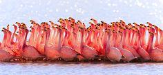 20+ Breathtaking Photos Of Animal Migration