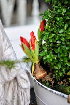 D Flowers, Holding Flowers, Love Garden, Veggies, Herbs, Healthy, Spring, Plants, Food