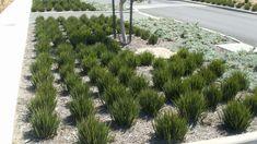 Rev 1, Google Images, Landscaping, Plants, Yard Landscaping, Flora, Landscape, Plant, Garden Design