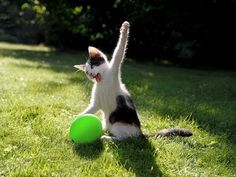Cats vs balloon explosion ( Funny Compilation) - YouTube