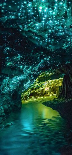 The world famous Waitomo Glowworm Caves are one of New Zealand's most celebrated tourist attractions. The tiny glow worms produce a myriad of tiny bright lights that dot the cave ceiling. #color #travel