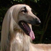 Köpek Cinsleri, Köpek Irkları, Köpek Türleri