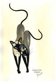 Siamese Friends - I need to get a Siamese friend for my Siamese kitty