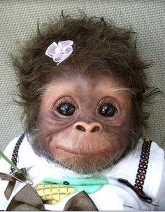 Baby Monkey - 38 Cute Baby Animals #cutePets #Pets #Cute