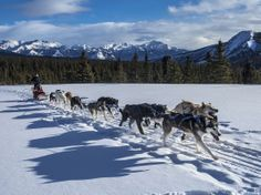 8 Perfect Parks for a Winter Workout >> Dog Sledding at Denali National Park