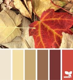 Color Scale Of Autumn Leaves Warm Shades Of Brown