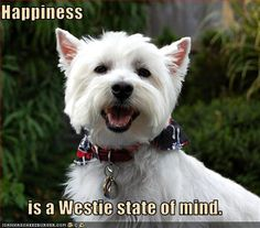 Happiness is a westie state of mind.