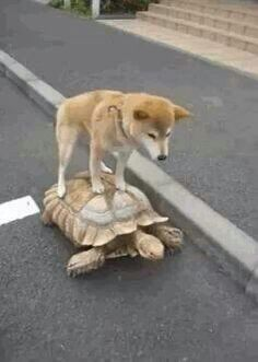 Could you please go a little bit faster, I'm hungry