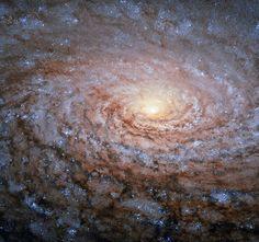 La disposición de los brazos espirales de la galaxia Messier 63 recuerda el patrón en el centro de un girasol