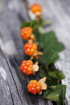 Cloudberries - have you ever heard of a berry with such a perfect name?