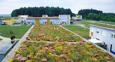 Toiture végétalisée ROCKERY TYPE PLANTS ZinCo