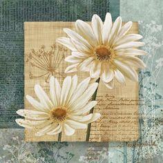Daisy Flower Field I Absorbent Coasters by Conrad Knutsen, Set of 8 Framed Art Prints, Fine Art Prints, Poster Prints, Wall Posters, Wall Decor Pictures, Print Pictures, Daisy Field, Kunst Poster, Arte Floral
