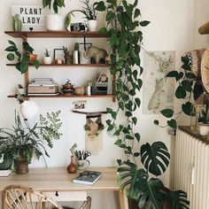 33 Best Natural Indoor Plants for Apartment Decoration Stylish Home Decor, Cheap Home Decor, Diy Home Decor, Easy House Plants, House Plants Decor, Cute Dorm Rooms, Cool Rooms, Apartment Decoration, Room Decorations