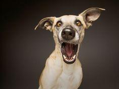 Hundefotografie im Atelier - Fotografie Elke Vogelsang, Hildesheim - Oskar - Chien Funny Animal Pictures, Cute Funny Animals, Dog Pictures, Funny Dogs, I Love Dogs, Cute Dogs, Perros Pit Bull, Dog Expressions, Photo Animaliere