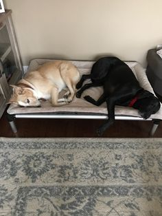 Vote for Tess and Millee and Carter's Forever Rescue and Sanctuary could win 5 free dog beds.