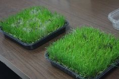 A Green Lawn for Spring