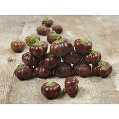 Paprika Samen MINI BELL Chocolate