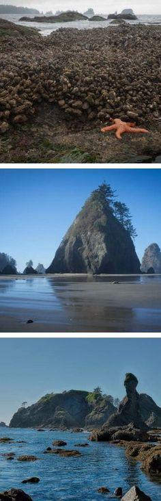 You can camp here! Shi Shi Beach, Olympic National Park, Washington.