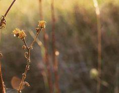 #day #daylight #macro #macrophotography #macrophoto #colors #macroflower #nature #naturephotography #colors #goldenhour #dslr_photography #romania #orastie