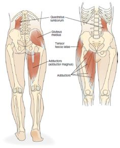 There is a lot of confusion concerning the chiropractors and their ability to handle lateral pelvic tilt. Fascia Lata, Hip Anatomy, Muscle Anatomy, Scoliosis Exercises, Hip Stretches, Neck Exercises, Fitness Exercises, Hip Pain, Back Pain