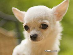 looks like my Lilly bug :)