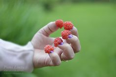 Raspberries Summer Photos, Raspberries, Fruit, Food, Summer Pictures, Essen, Raspberry, Meals, Yemek