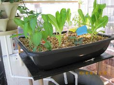 http://oursustainablelife.blogspot.com/2012/03/our-newest-addition-aquaponics.html