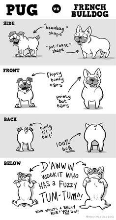 Pug vs. French Bulldog from SHELDON. anim, french bulldogs, doggi, pugs, puppi, frenchi obsess, pug and french bulldog, la frenchi, comic strips