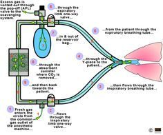 Anesthesia Equipment: Breathing Circuits