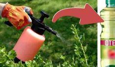 Iata cum poti folosi otetul in gradina - dr. Fire Extinguisher, Felicia, Spray Bottle, Cleaning Supplies, Outdoor Power Equipment, Floral, Flowers, Inspiration, Gardening